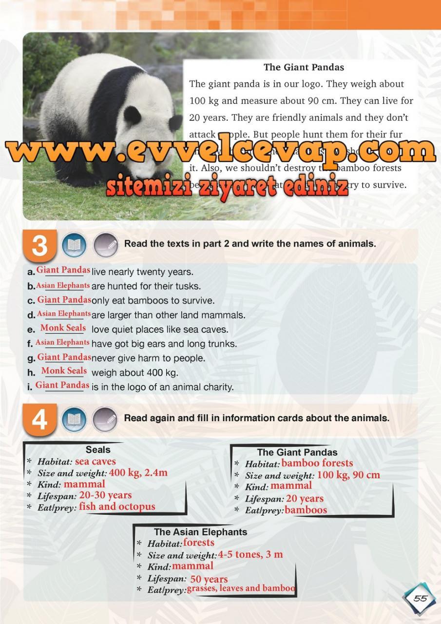 7 Sınıf Ingilizce Meb Yayınları Ders Kitabı Cevapları Sayfa 55